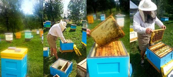 Miody pszczele